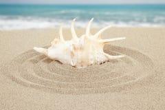 与沙子的贝壳与海在背景中 免版税图库摄影