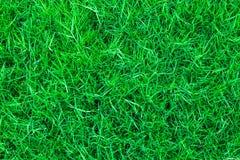 绿草背景纹理 图库摄影