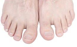 脚趾。 免版税库存照片