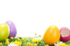 您看见了从桃红色复活节彩蛋的小鸡? 库存照片