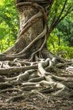 Тропическое дерево Стоковое Изображение RF