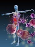 反对疾病的免疫 免版税图库摄影