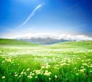 Άγρια λουλούδια άνοιξη Στοκ Εικόνα