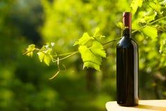 红葡萄酒瓶在葡萄园里 免版税图库摄影