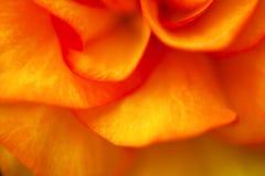 Предпосылка лепестков цветка Стоковая Фотография RF