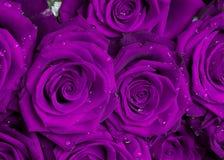 紫色玫瑰花束 免版税库存照片