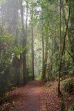 森林路径雨豆树 库存图片