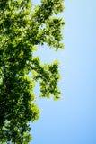树 免版税库存照片