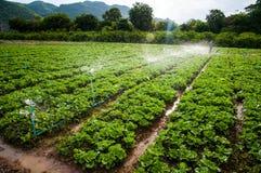 Φυτικό αγρόκτημα Στοκ φωτογραφίες με δικαίωμα ελεύθερης χρήσης