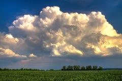 在一块绿色麦田的雷云 库存照片