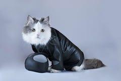 猫摩托车 免版税库存图片