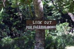 Посмотрите вне для падая кокосов Стоковое фото RF