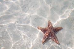在清楚的水的海星 免版税库存照片