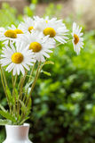 在花瓶的雏菊花有浅焦点的 免版税库存照片