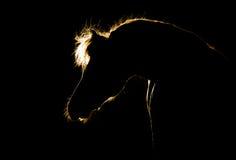 Силуэт лошади на черноте Стоковое фото RF