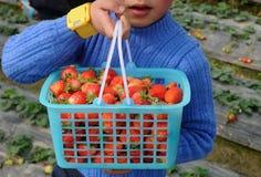 男孩运载的草莓 免版税库存图片