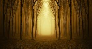 道路低谷有雾的一个奇怪的森林在秋天 免版税库存图片