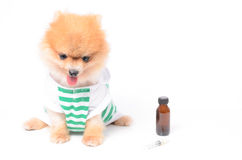 不适的狗和药物 免版税图库摄影