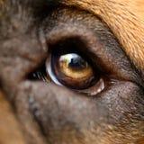 宏观狗眼睛 免版税图库摄影