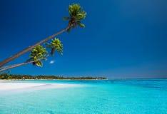 在离开的海滩的少量棕榈热带海岛 免版税库存照片