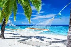 在棕榈树之间的吊床在热带海滩 免版税库存照片