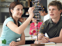 审查脱氧核糖核酸模型和采取笔记的学生 图库摄影