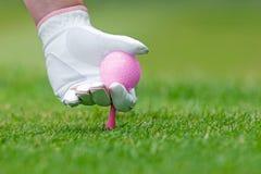 夫人打高尔夫球安置桃红色发球区域和球的手入地面。 库存照片