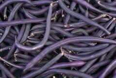 紫色蜡云豆 免版税库存照片