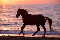 Лошадь бежать через воду Стоковые Изображения