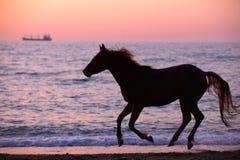 Лошадь бежать через воду Стоковое фото RF