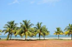 在热带海滩的棕榈树在海附近 免版税库存照片