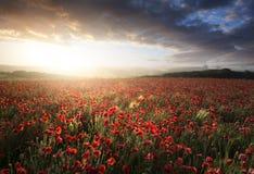 Сногсшибательный ландшафт поля мака под небом захода солнца лета Стоковые Изображения