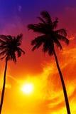 在海滩的棕榈树日落 免版税库存图片