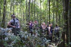 迁徙在乌干达的黑猩猩 库存照片
