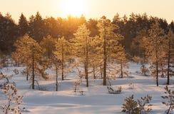 金黄日出在冬天早晨的沼泽 免版税图库摄影