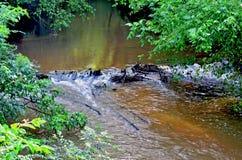 在小小河的海狸水坝 免版税库存图片