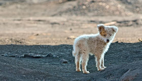 Собака трущобы Стоковое Фото