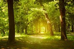 森林道路 库存图片