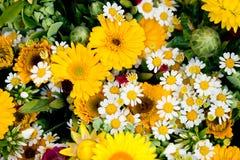 花春天夏天庆祝的美好的五颜六色的收藏 免版税库存照片