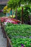 Εγκαταστάσεις και λουλούδια για την πώληση Στοκ εικόνες με δικαίωμα ελεύθερης χρήσης