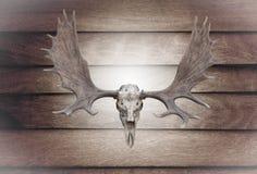 特写镜头在木墙壁上的头骨麋 免版税图库摄影