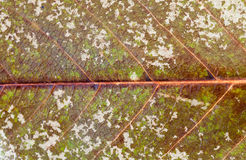 有真菌的叶子 免版税库存照片