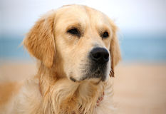 σκυλί Στοκ Φωτογραφία