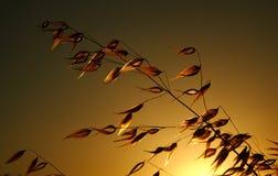 植物剪影在日落期间的草甸 免版税库存照片