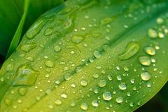 湿叶子关闭 免版税库存照片