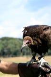 以鹰狩猎者戴头巾雕 免版税库存图片