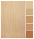 与色板显示指南的无缝的木纹理 库存图片