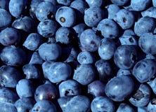 蓝莓果子 免版税库存图片