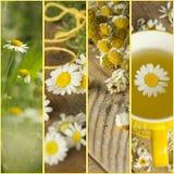 与春黄菊的拼贴画 免版税库存照片