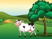 一头微笑的母牛 库存照片